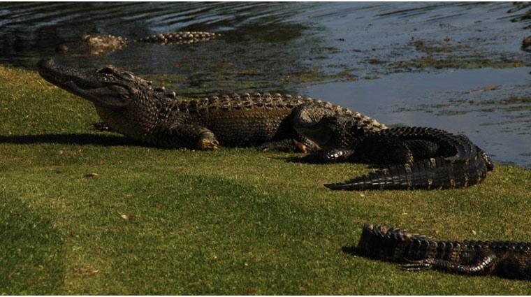 Kiawah Golf OspreyPoint 5