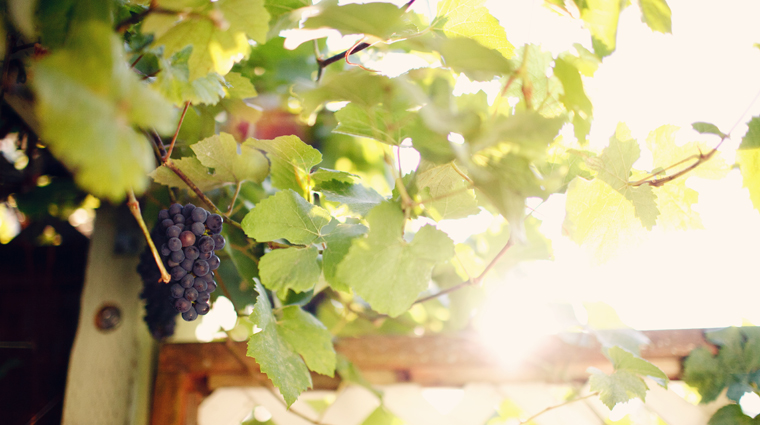 PropertyImage ThePaintedLadyRestaurant Restaurant Style GrapeVines CreditThePaintedLadyRestaurant