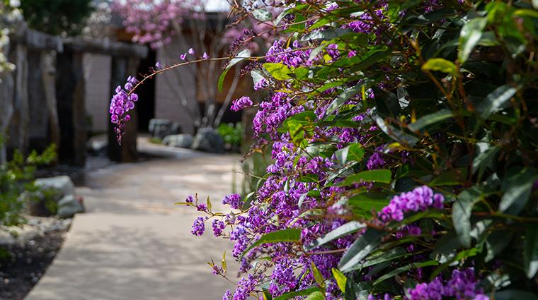 bardessono hotel and spa magnolia grove