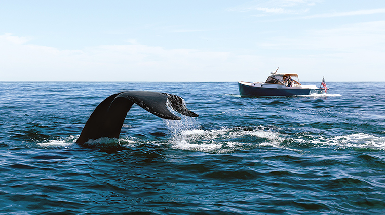 chatham bars inn resort and spa whale watching