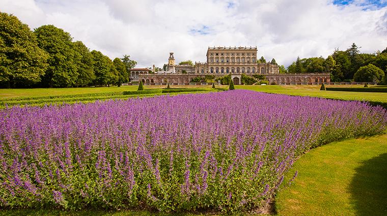 Cliveden House Lavender