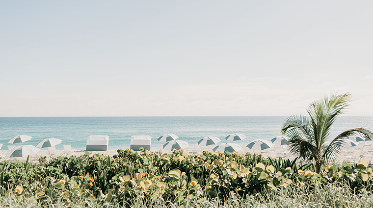 four seasons resort palm beach beach shoreline