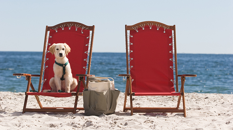 inn by the sea pet friendly