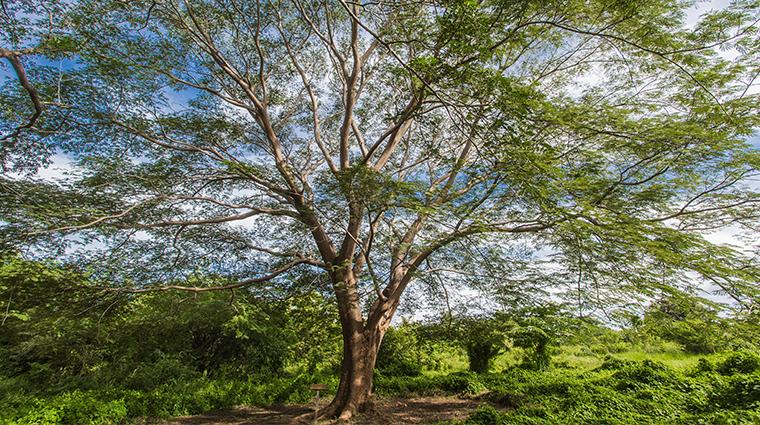 nekupe sporting resort and retreat Guanacaste Tree