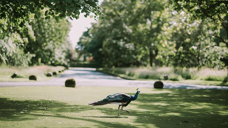 prestonfield house edinburgh peacock