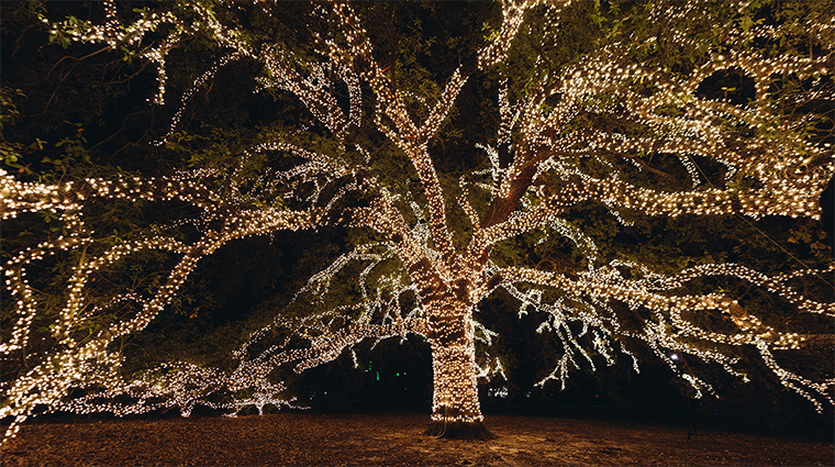 the houstonian hotel club and spa lighted oak tree16