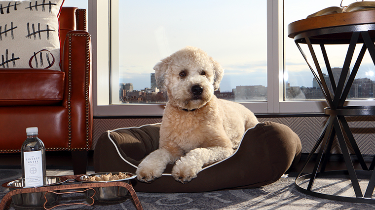 the liberty hotel a luxury collection hotel dog