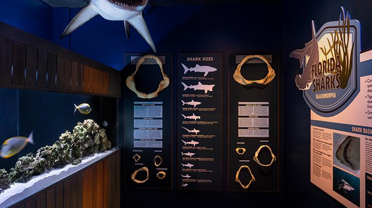 the ritz carlton naples nature wonders shark room