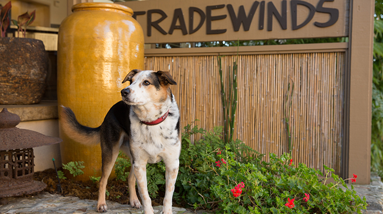tradewinds carmel entry dog